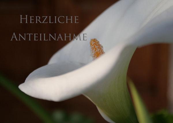 """Trauerkarte mit weisser Calla und mit Text """"Herzliche Anteilnahme"""""""