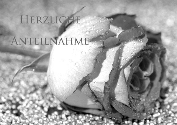 Trauerkarte mit Rose in schwarz-weiss mit Text Herzliche Anteilnahme