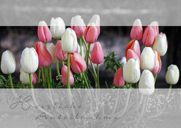 Trauerkarte mit Text Herzliche Anteilnahme, Strauss mit rot-weissen Tulpen