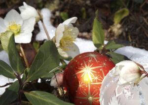 Weihnachtskugeln und Christrosen