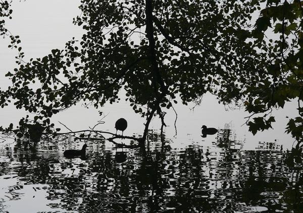 schwarz weiss, Villette-Park, Cham