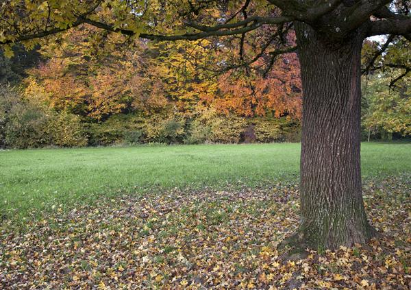 Hünenberg, der Baum