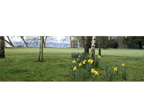 Frühlingswiese mit Osterglocken im Villette-Park