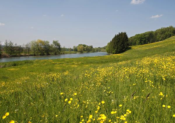 Frühlingswiese an der Reuss in Hünenberg