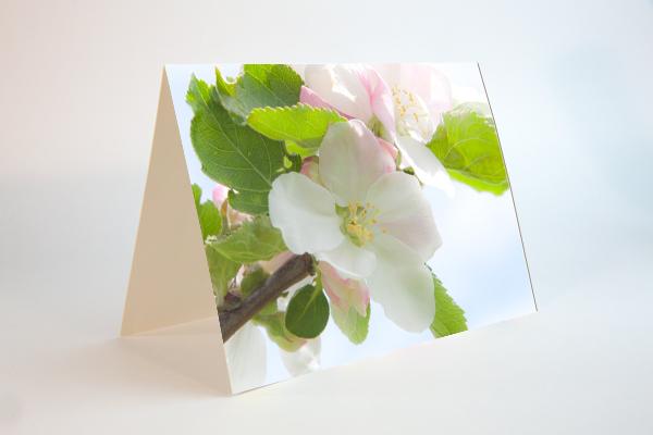 Frühlingskarten