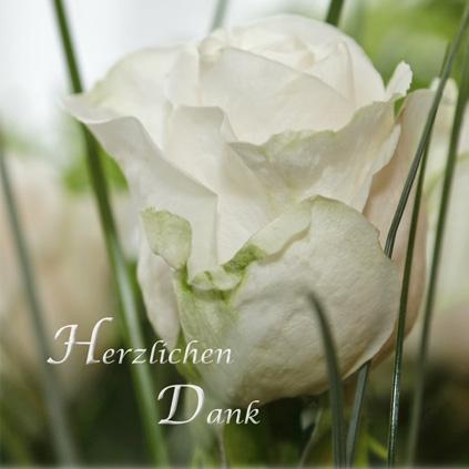 """Weisser Rosenkopf mit Grün, Text """"Herzlichen Dank"""""""