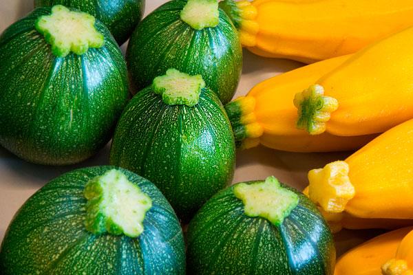 Gemüse- und Beerenanbau, Zucchini