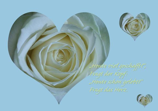 Weisses Rosenherz auf blauem Hintergrund mit Spruch