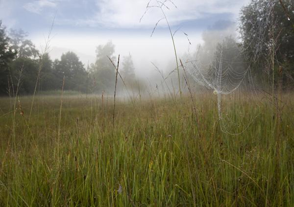 Spinnennetz am Waldrand