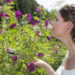 Hochzeit Monika & Roger, Braut geniesst den Duft der Blüte
