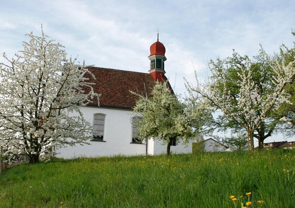 Weinrebenkapelle Hünenberg mit Chriesibäumen in Blütenpracht