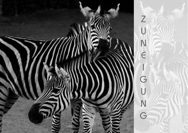 """Zwei Zebra ganz nah, Text """"Zuneigung"""""""