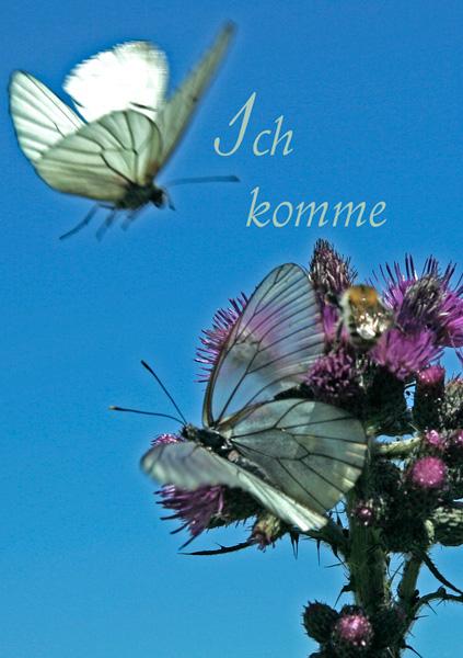 Zwei Schmetterlinge an Blütenzweig