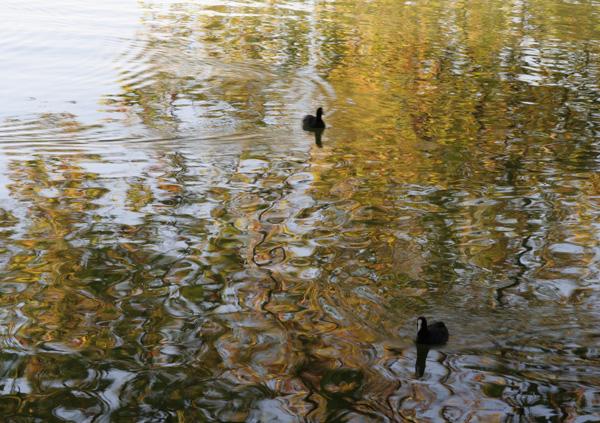 Zugersee Cham mit Herbstspiegelung