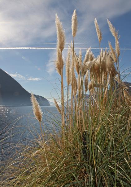 Hohe Gräser im Hintergrund See